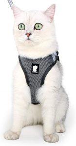 Evel Cat Walking Harness Set