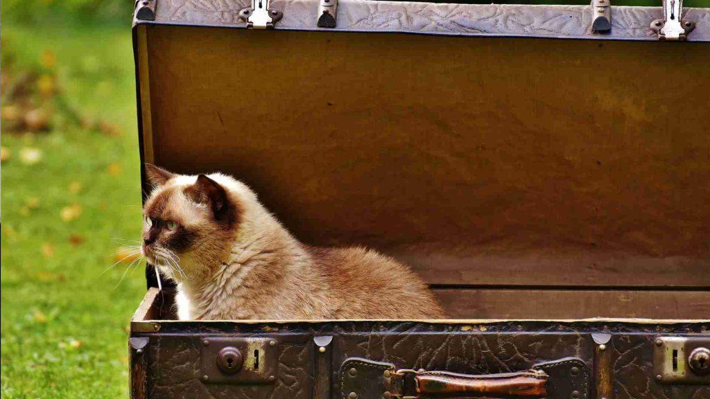cat travel
